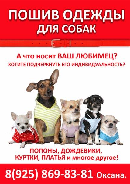 эскизы одежды для собак: